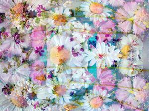 A Floral Montage with Daisies by Alaya Gadeh