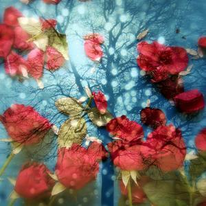 A Montage of a Tree and Red Rose Petals in Sparkling Light and Reflections by Alaya Gadeh