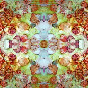 A Montage of Flowers and Seashells Turned into a Mandala by Alaya Gadeh