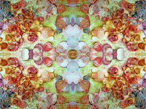 An Ornamental Symmetric Montage from Flowers and Seashells by Alaya Gadeh
