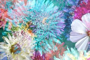 Blossoms of Dahlia and Daisy Star, Poetic Photographic Layer Work by Alaya Gadeh