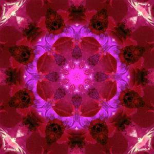 Bright Energetic Mandala Ornament from Flowers by Alaya Gadeh