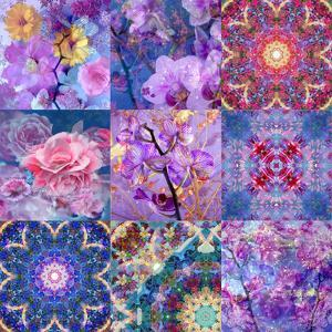 Collage from Flower Montages by Alaya Gadeh