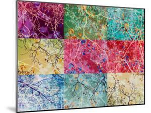 Collage from Layered Photographs from Trees in Multicolor by Alaya Gadeh