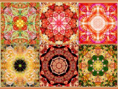 Collage of Flowers Mandalas, Composing