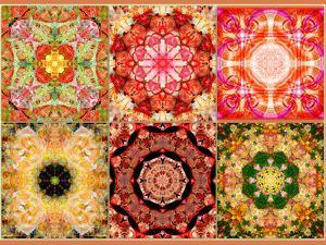 Collage of Flowers Mandalas, Composing by Alaya Gadeh