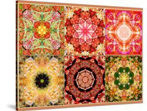 Collage of Flowers Mandalas, Composing by Alaya Gadeh