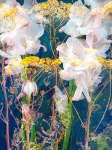Composing of Flowers by Alaya Gadeh