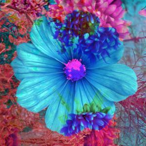 Composing with Blue Flowers by Alaya Gadeh