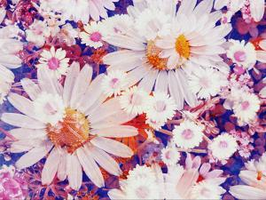 Composing with Marguerites and Daisies by Alaya Gadeh