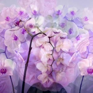 Composing with Pink Peonies and White Orchids by Alaya Gadeh