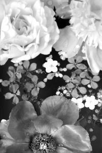 Flower in the Water, B/W, Close-Up by Alaya Gadeh