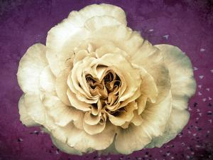 Flower of a White Rose, Texture, Birds, Composing by Alaya Gadeh