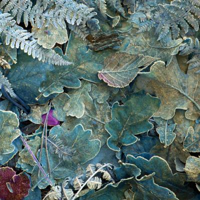 Gentle Blue Frosted Leafes in the Forest