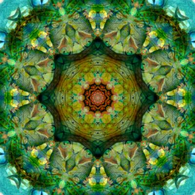Mandala Alltime Favourite
