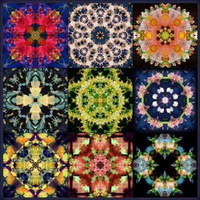 Mandala Collection No 17