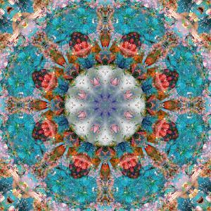 Mandala of Flower Photographies by Alaya Gadeh
