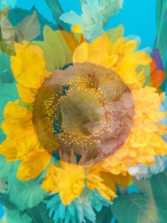 Montage of a Sunflower, Composing