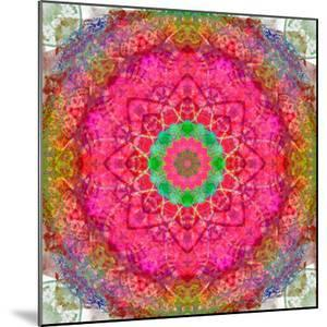 Montage of Flowers, Photographies in a Symmetrical Ornament, Mandala by Alaya Gadeh