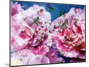 Photographic Layer Work from Pink Blossoms in Waterand Red Roses by Alaya Gadeh