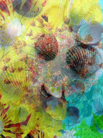 Photographic Layer Work from Seashells and Flowers