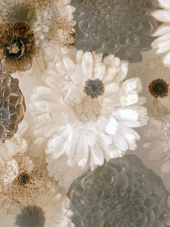 Photographic Layer Work from White and Brown Blossoms