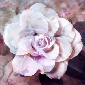 Photographic Layer Work of a White Rose by Alaya Gadeh