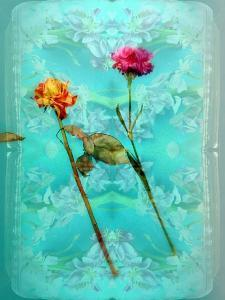 Photographic Layer Work of Two Flowers and Ornament from Flowers by Alaya Gadeh