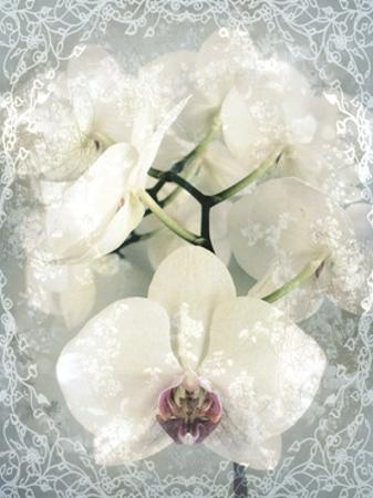 Poem To A White Orchid I