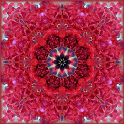 Rose Mandala