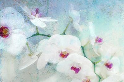 White Poetic Orchid