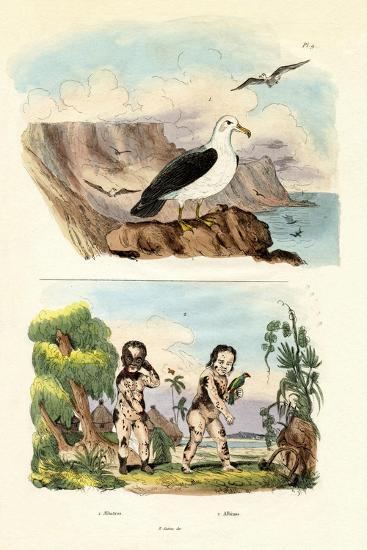 Albatros, 1833-39--Giclee Print