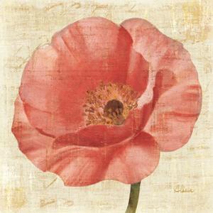 Blushing Poppy on Cream by Albena Hristova
