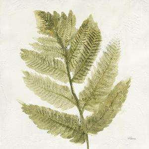 Forest Ferns I by Albena Hristova