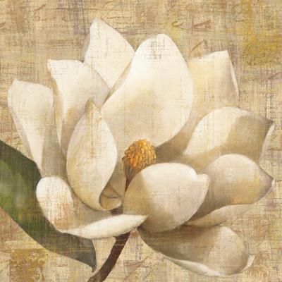 Magnolia Blossom on Script
