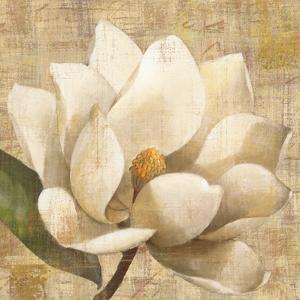 Magnolia Blossom on Script by Albena Hristova