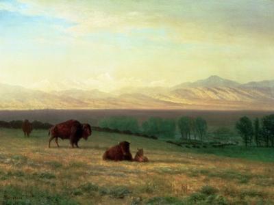 Buffalo on the Plains, C.1890 by Albert Bierstadt