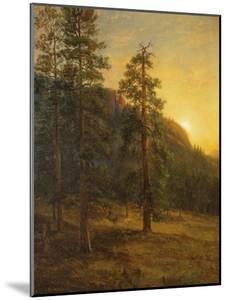 California Redwoods, 1872 by Albert Bierstadt