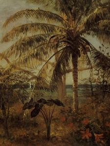 Palm Tree, Nassau, 1892 by Albert Bierstadt