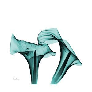 Calla Lilies by Albert Koestsier