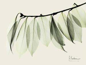 A Camelia Leaf Moment by Albert Koetsier