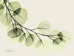 A Eucalyptus Moment by Albert Koetsier
