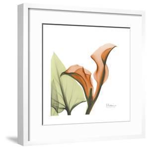 A Gift of Calla Lilies in Orange by Albert Koetsier