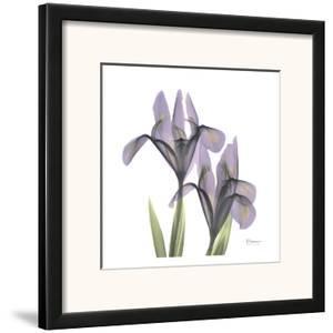 A Gift of Flowers in Purple by Albert Koetsier