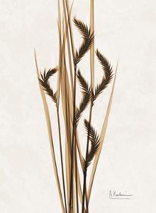 Aged Oat Grass by Albert Koetsier