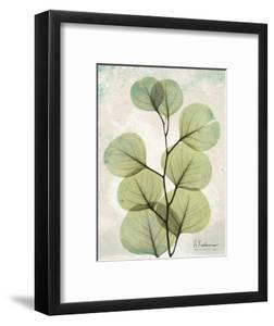 Aged Stone Eucalyptus by Albert Koetsier