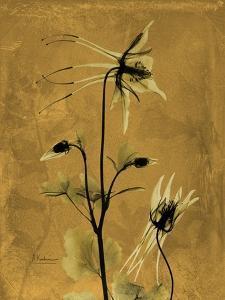 Amber Opus Columbine by Albert Koetsier