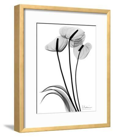 Anthurium Triple in Black and White
