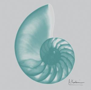 Aquifer Sea Shell by Albert Koetsier