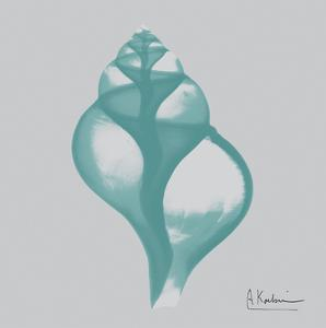 Aquifer Tulip Shell by Albert Koetsier